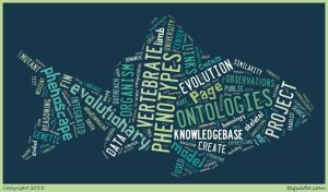 phenowordcloud